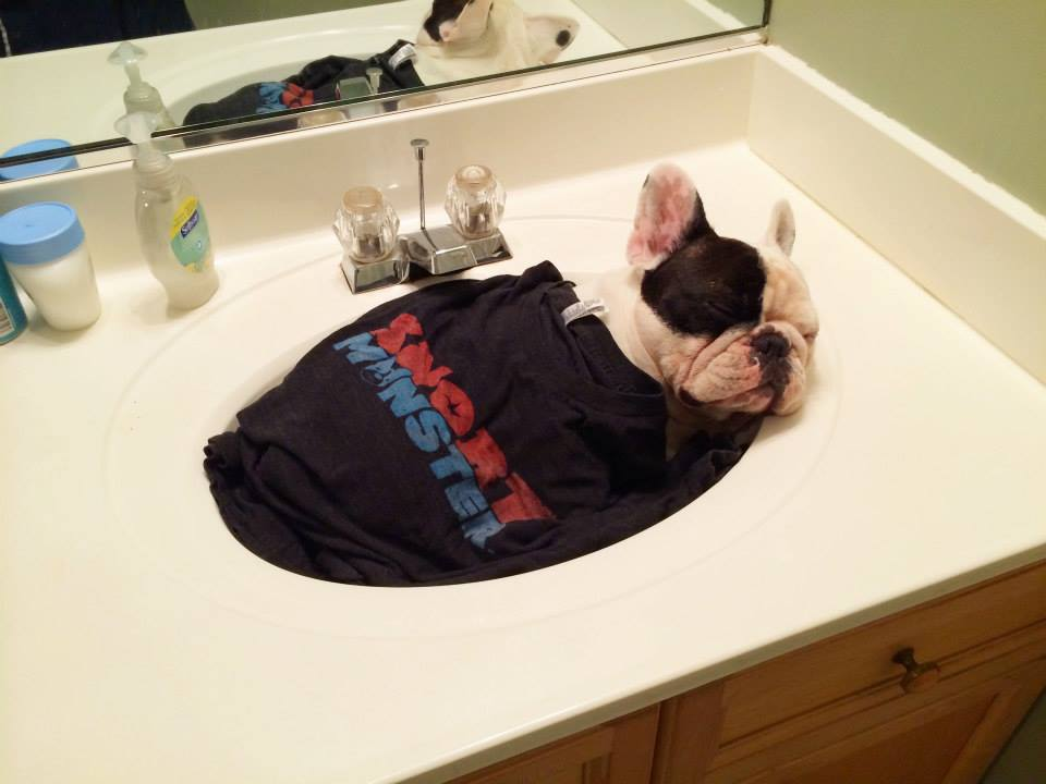 Manny's dad sent us this the morning of the big pawty: This is how Manny charges up before the meetup with his super cozy 2-color Snort Monster Logo Tri-blend tee! heart emoticon What a dream for us!
